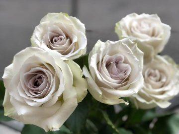 flores-categoria