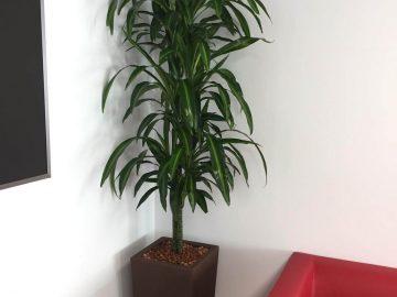 plantas-categoria